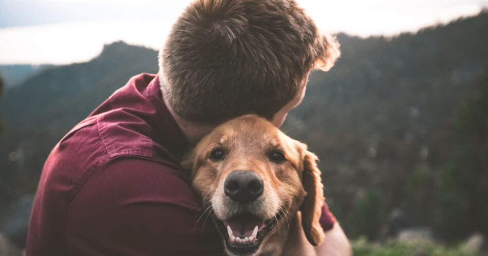 10 Ways to Enjoy Animals Without Actually Owning a Pet